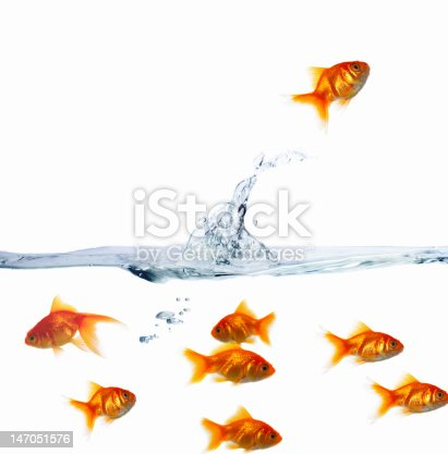 istock Goldfishes in water against white background 147051576