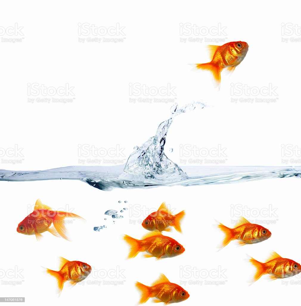Goldfishes in water against white background stock photo
