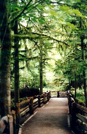 istock Goldstream Path 172675760