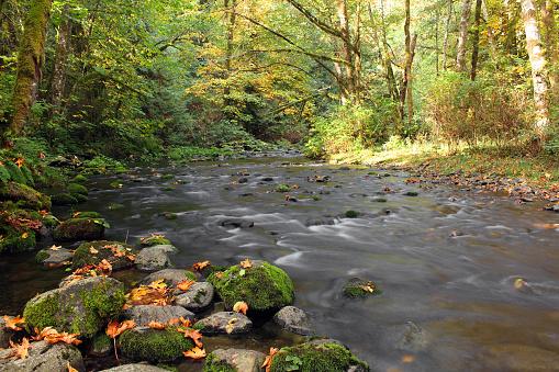 istock Goldstream Provincial Park 491514322