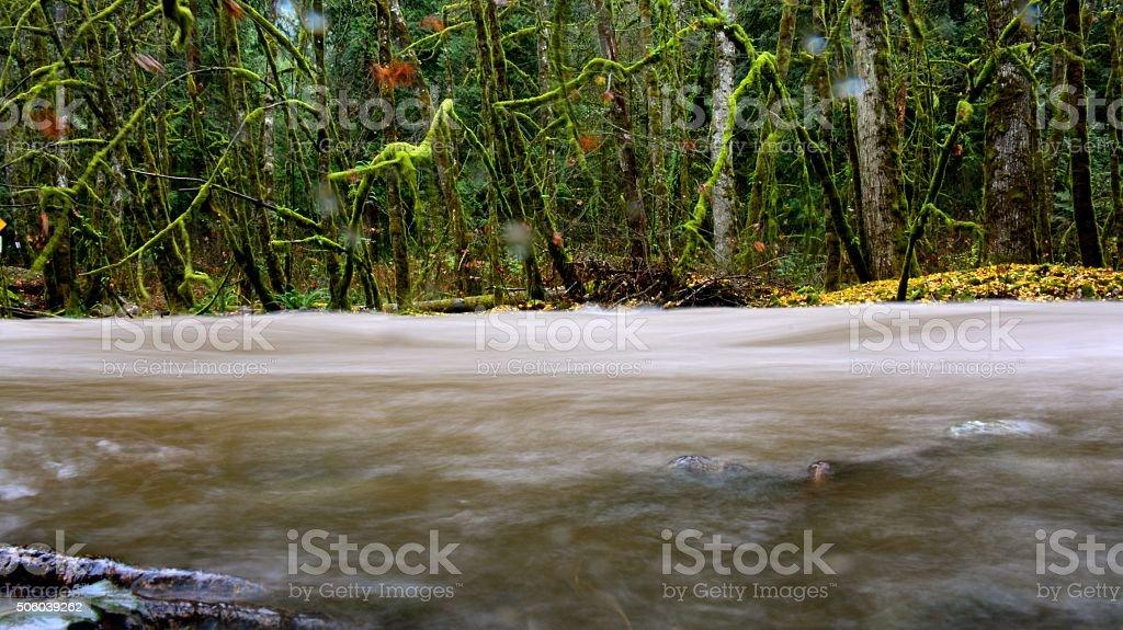 Goldstream River royalty-free stock photo