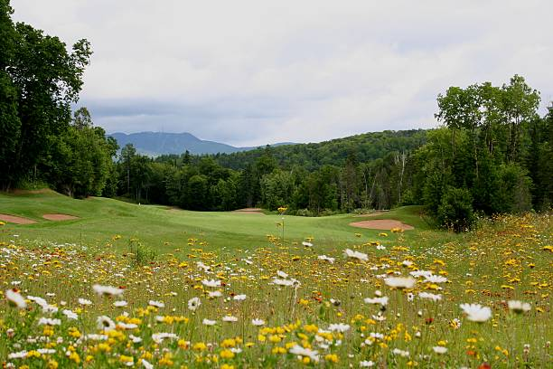 Golf and Wildflower Landscape stock photo