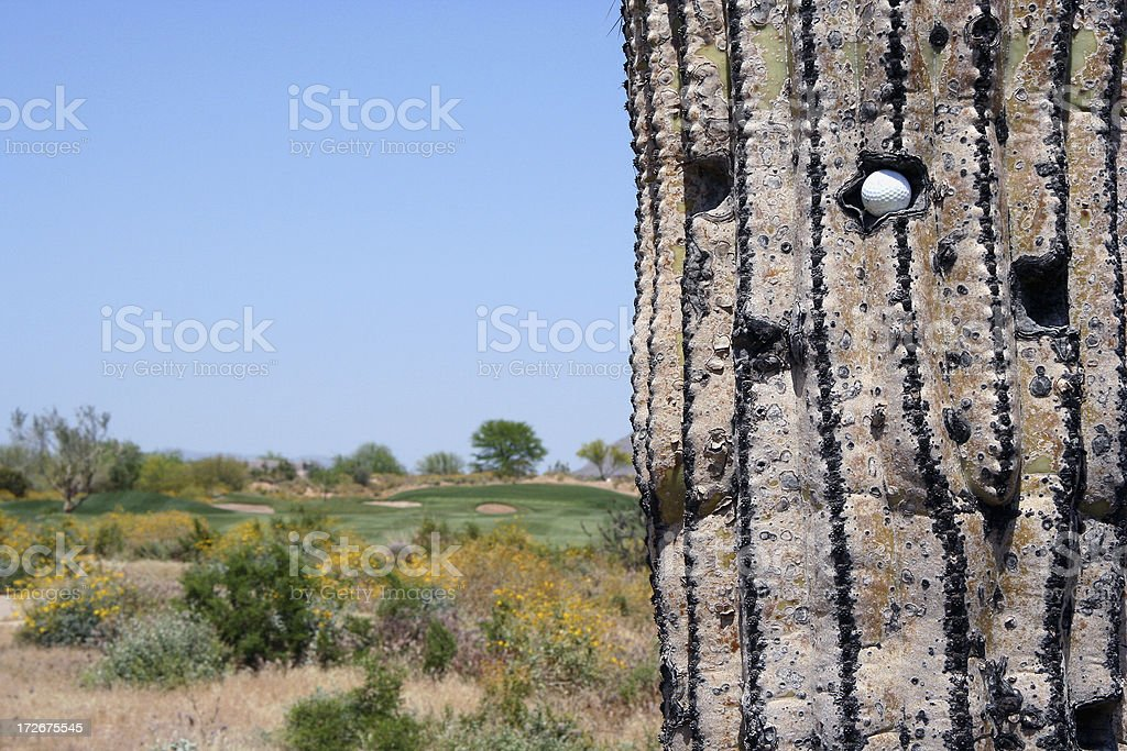 Golf ball in cactus 2 royalty-free stock photo
