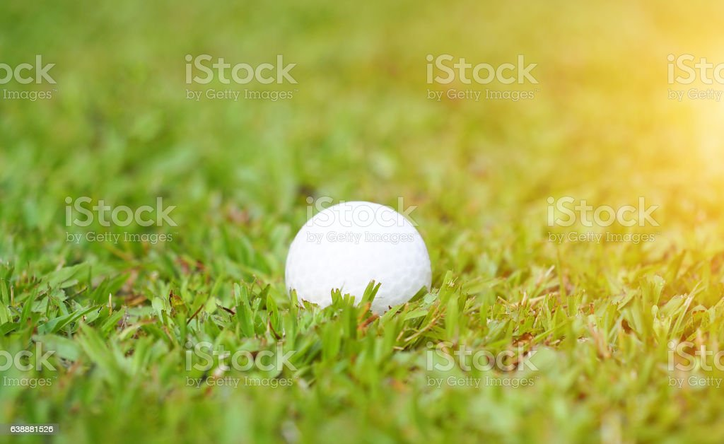 Golf ball on green grass in golf course stock photo