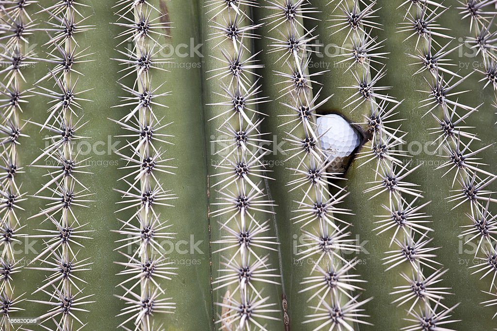 Golf Ball Wedged in Cactus royalty-free stock photo