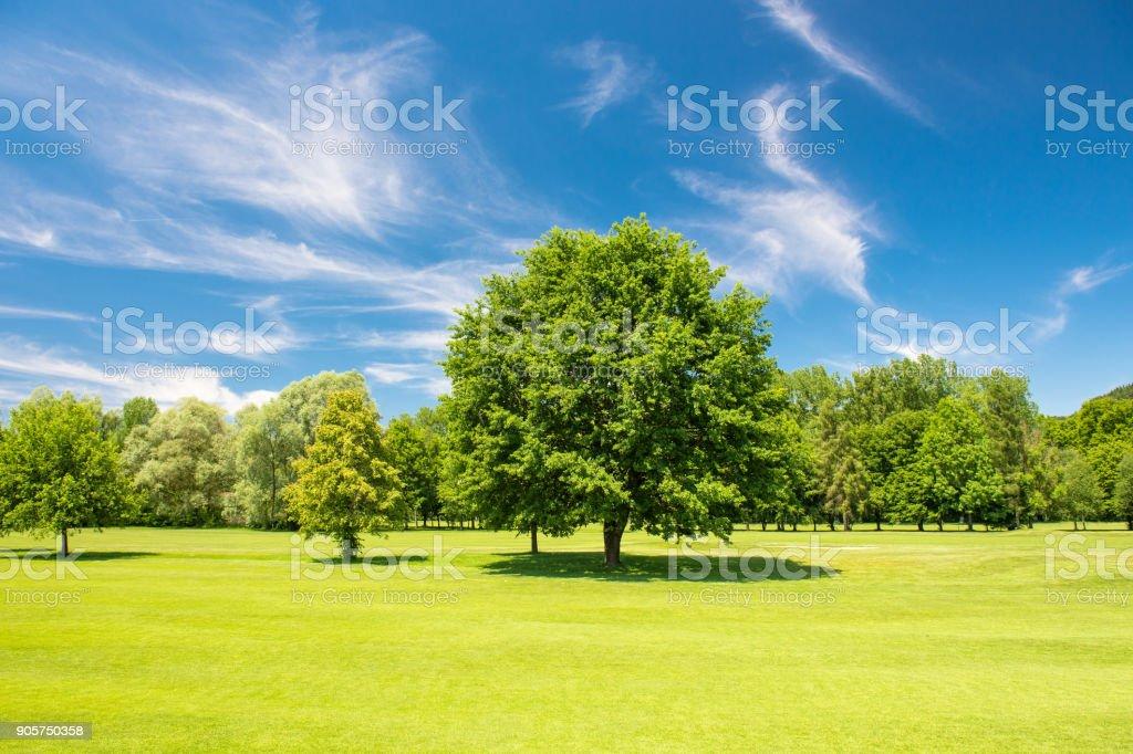 Golf course beautiful blue sky green field landscape stock photo