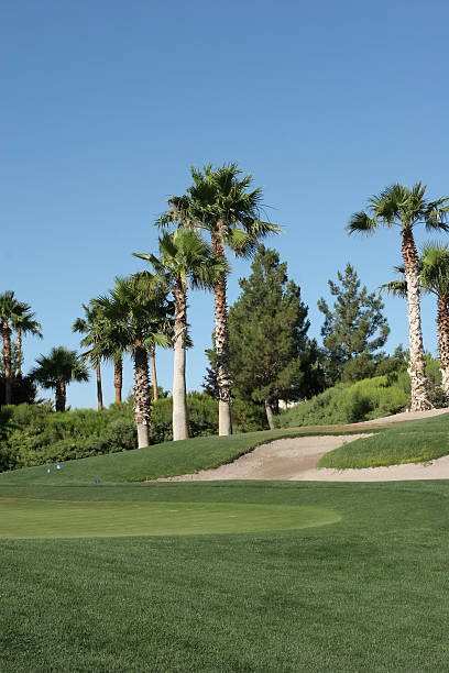 Golf course field and palm trees stock photo