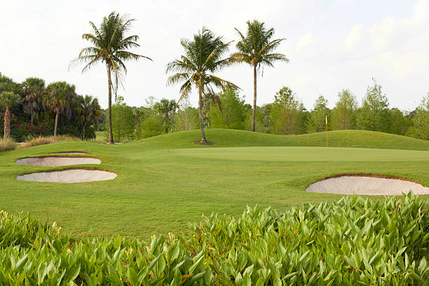 Golf Course With Palm Trees And Bunkers stock photo