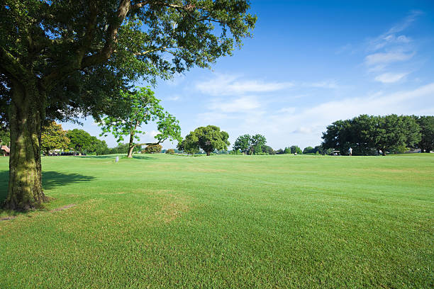 Golf Fields Golf fields and beautiful summer landscapes.  grounds stock pictures, royalty-free photos & images
