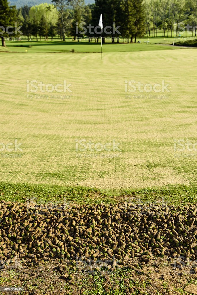 Golf green during aeration process showing cores stock photo