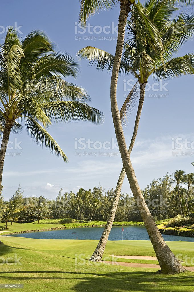 Golf in the Tropics royalty-free stock photo