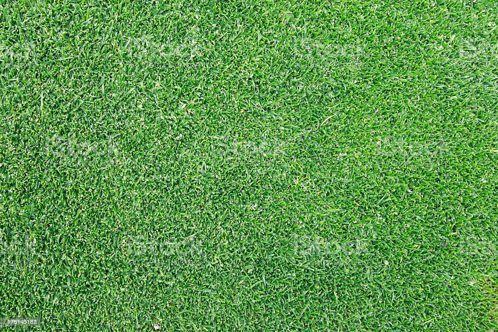 Golf Putting Green Grass royalty-free stock photo