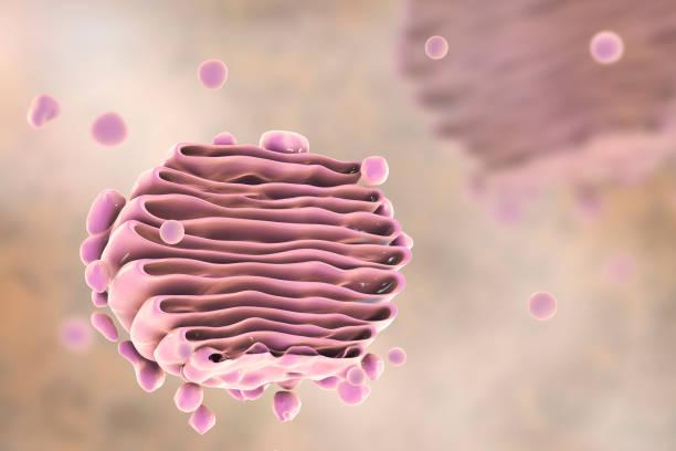 Aparato de Golgi de la célula, más cerca - foto de stock