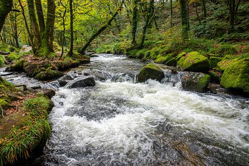 Golitha Falls, Cornwall in autumn