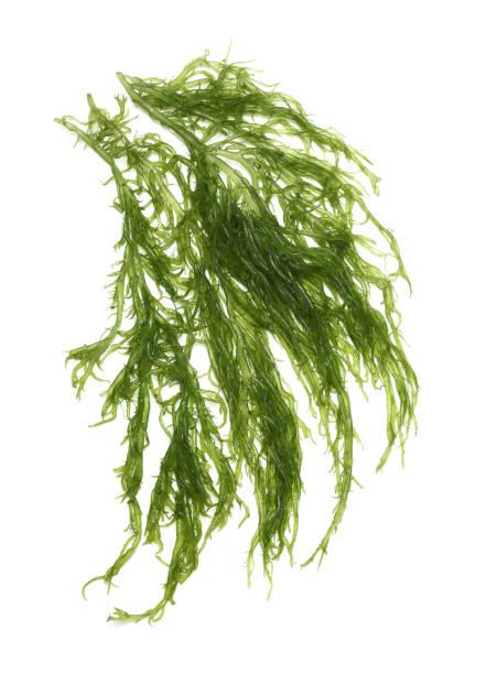 ensalada de wakame o algas de goma sobre un fondo de madera - algas fondo blanco fotografías e imágenes de stock