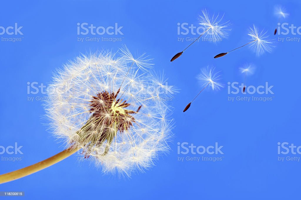 Gone with the wind royalty-free stock photo