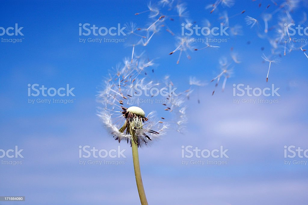 Gone with the wind stock photo