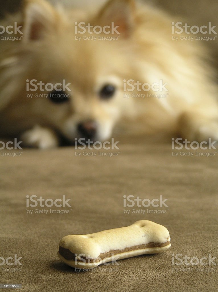 good boy royalty-free stock photo