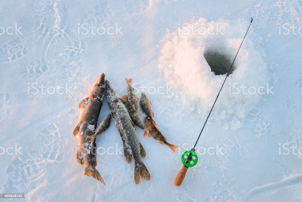 Good catch, close-up, fishing rod and fish near the ice-hole on the winter river in a sunny day - Royalty-free Blue Stock Photo