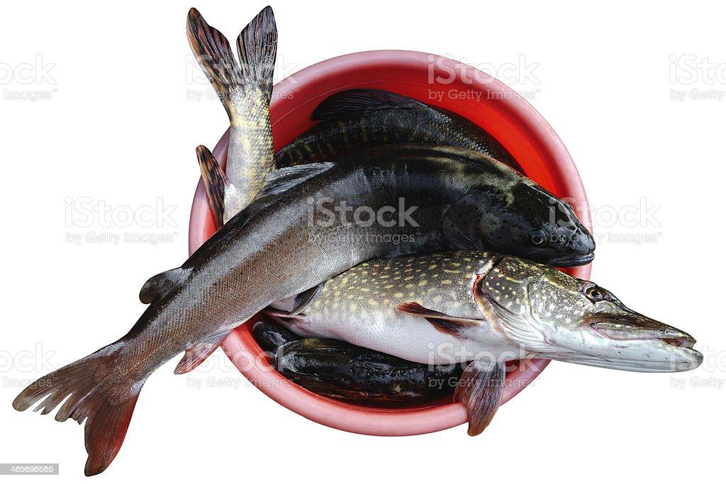 Good catch stock photo