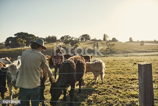 Shot of two farmers tending to their herd of livestock in the field