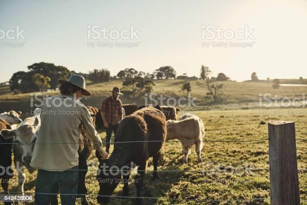 Good farmers get to know their herds picture id642438606?b=1&k=6&m=642438606&s=612x612&h=b7lvudppxfegiue i3loch 12fafy8kakgctc60wkqg=