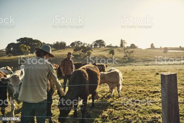 Photo of Good farmers get to know their herds
