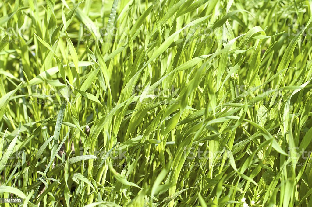 good green grass royalty-free stock photo