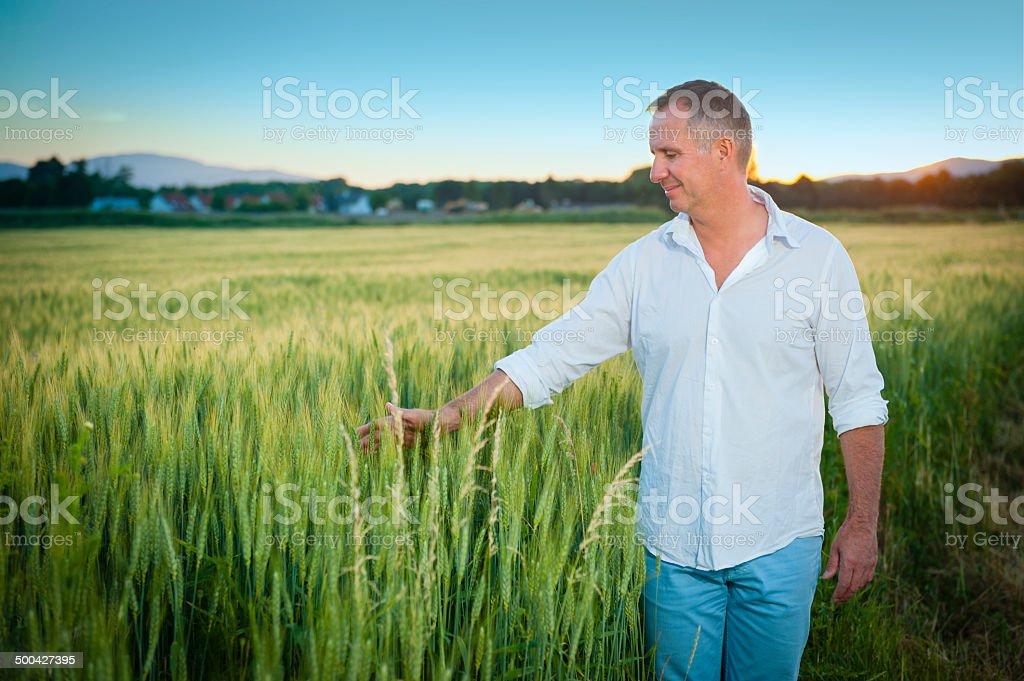 Good Harvest royalty-free stock photo
