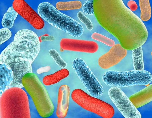 Good intestinal microflora , healthy guts multi-colored probiotic bacteria illustration. Good intestinal microflora and bacteria Lactobacillus and Bifidobacteria. bifidobacterium stock pictures, royalty-free photos & images