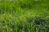 istock Good looking grass 1209482754