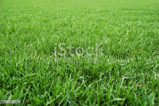Nice green lawn/grassOther green grass images:
