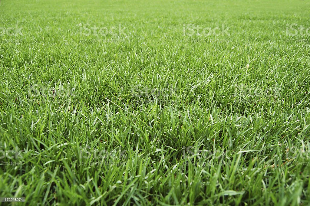 Good looking grass stock photo