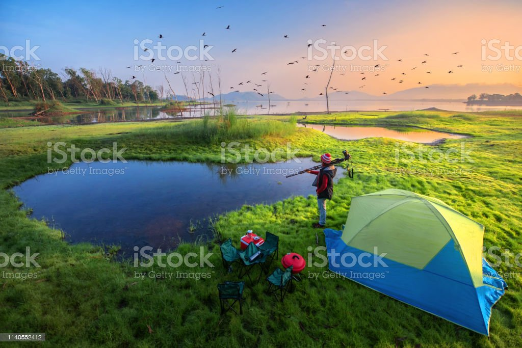 Good Morning Birds Stock Photo Download Image Now Istock