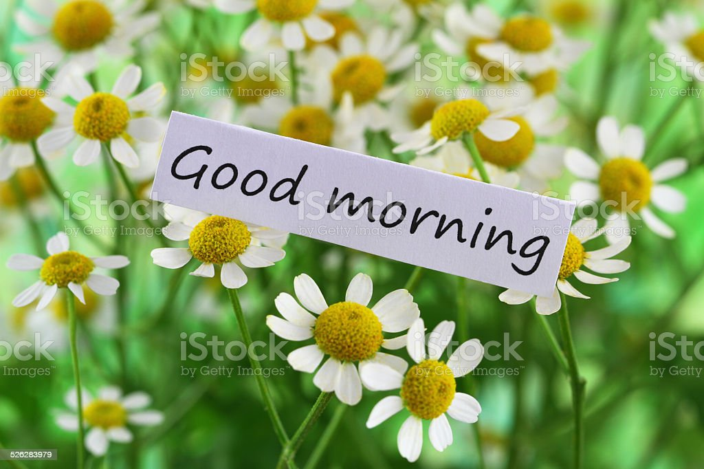 Good Morning Card With Chamomile Flowers 照片檔及更多一朵花