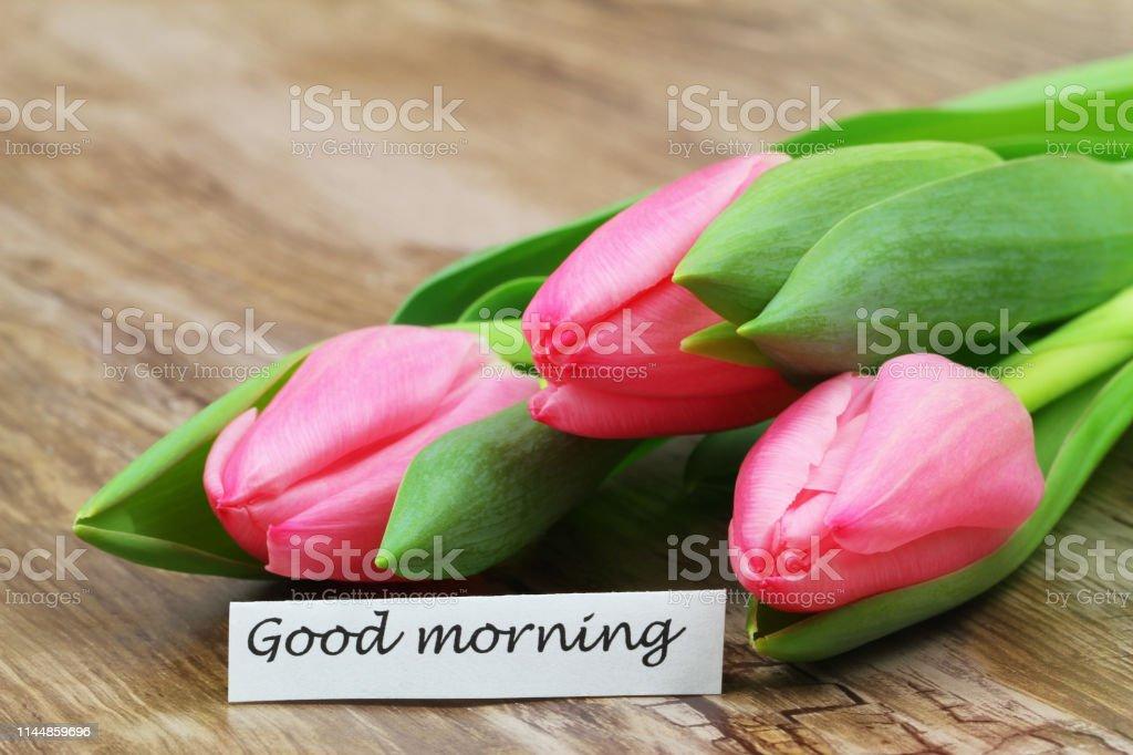 Guten Morgen Karte Mit Drei Rosa Tulpen Stockfoto Und Mehr