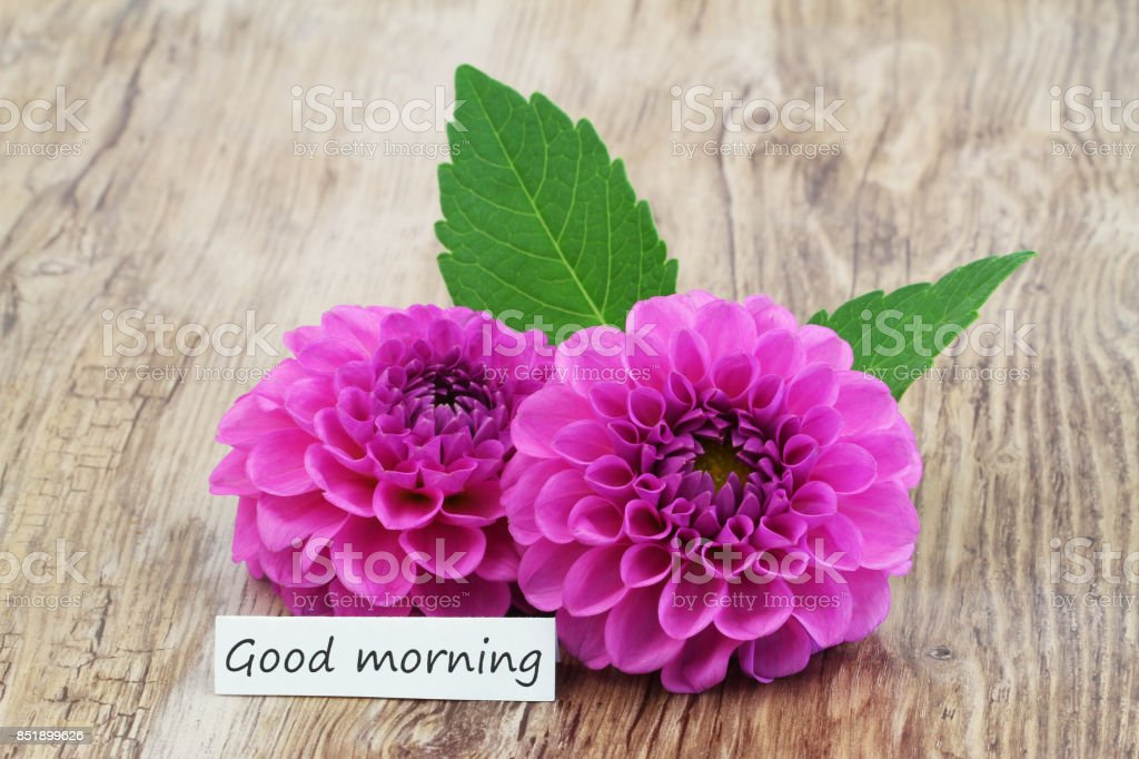 Good Morning Card With Two Pink Dahlia Flowers On Wooden Surface