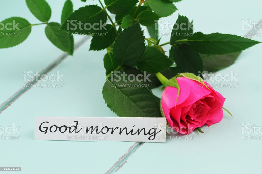 good morning card with wild pink rose rose on wooden tray stock