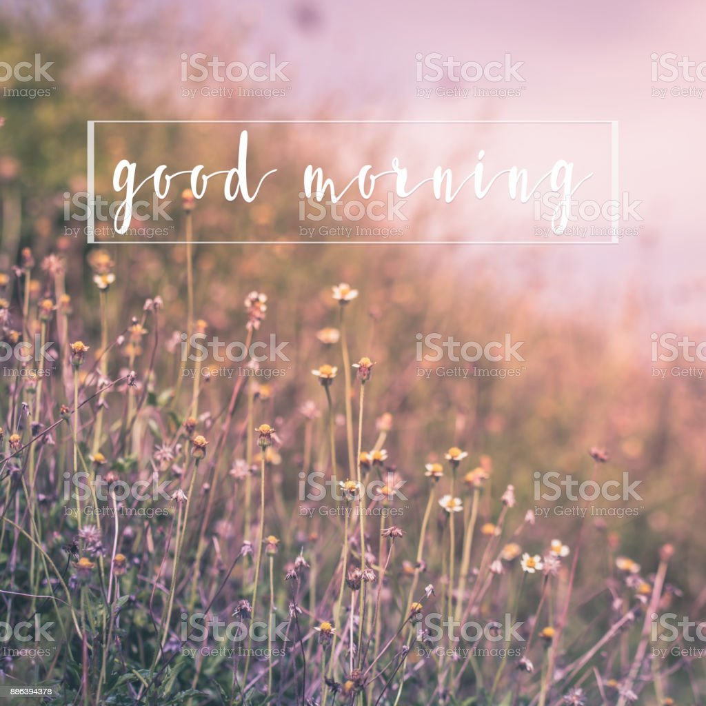 Good Morning Message On Nature Flower Background Greetings Card
