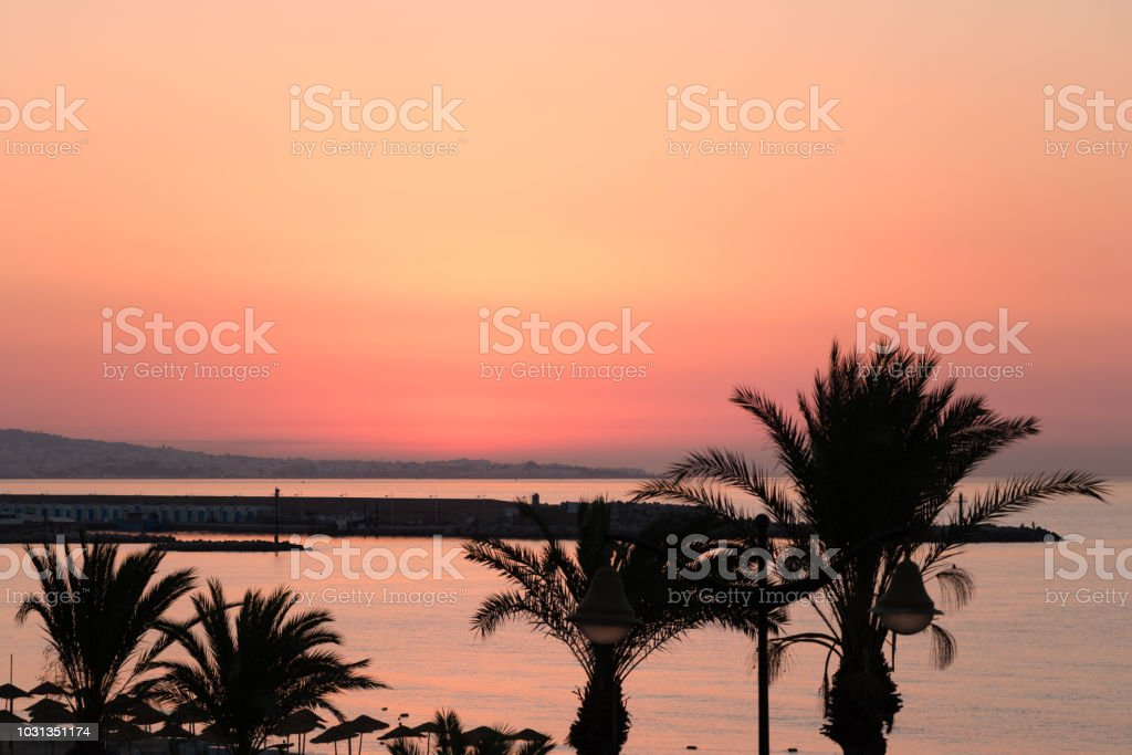 Palmen Sie Guten Morgen Yasmine Hammamet Tunesien Afrika