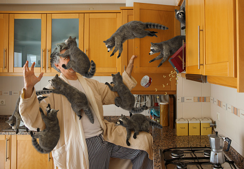 High resolution digital image of a man in a kitchen, early in the morning, opening a cabinet and unintentionally releasing a swarm of juvenile raccoons. The raccoons are streaming from the open cabinet, and several of them have jumped onto the man, including one that is covering his face like a mask, one perched on his leg, and several hanging off of his arms. The raccoons have also knocked over a box of macaroni, and a can of tuna, because they are awful little creatures who have no respect for other people's things.  The eye of the man is just visible beneath the raccoon covering his face, and his surprise and terror are obvious. Kitchen bathed in a warm golden morning light, and an Italian style coffee pot is sitting on the stove.