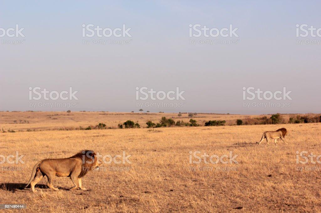 Guten Morgen Savanne Stockfoto Und Mehr Bilder Von Afrika