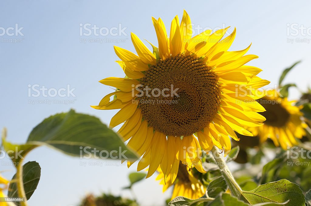 Good Morning Sunshine!!! stock photo