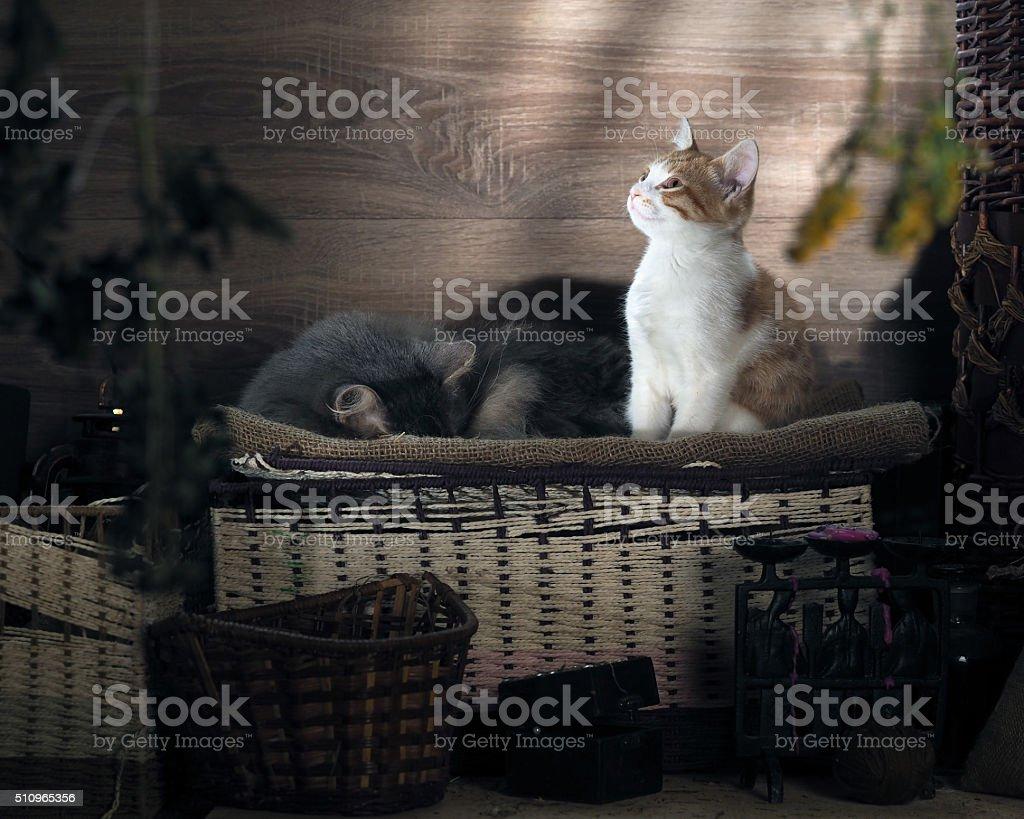 Guten Morgen Die Katze Aufwachte Und Lächelnde Sonne