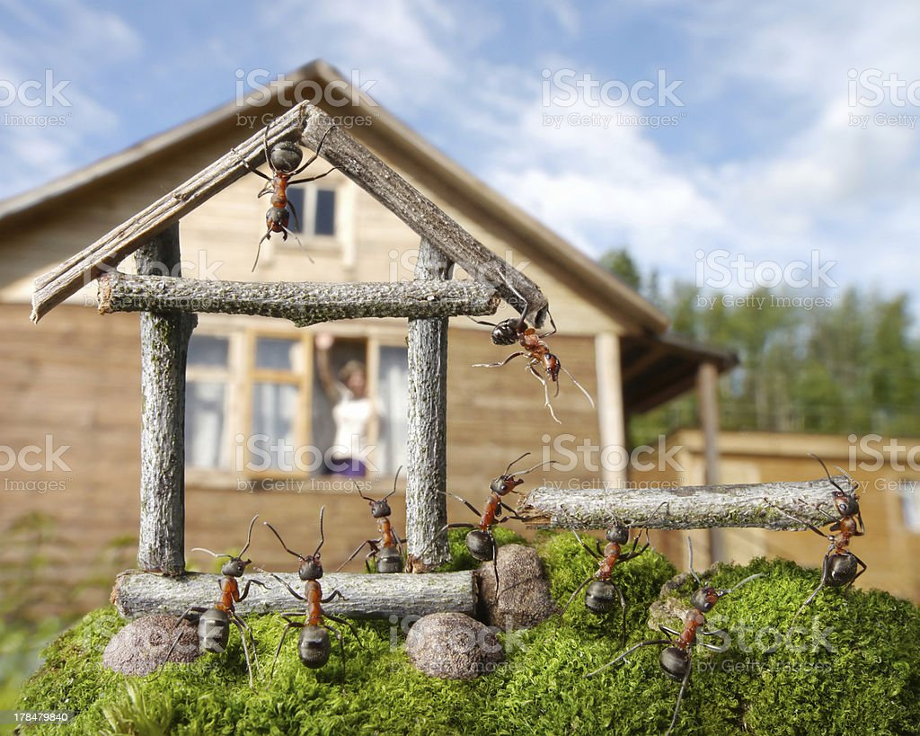 good neigbours, human and ants stock photo