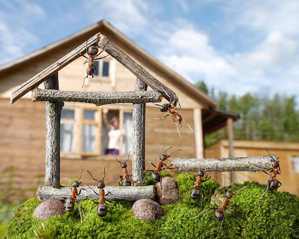 Gute Nachbarn, menschlicher und Ameisen – Foto