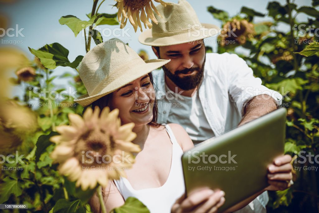 Good News About A Harvest stock photo