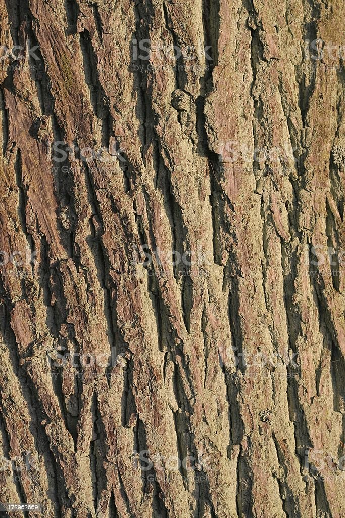 Good old bark stock photo