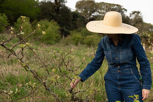 Woman working on a organic farm checking a kiwi fruit tree