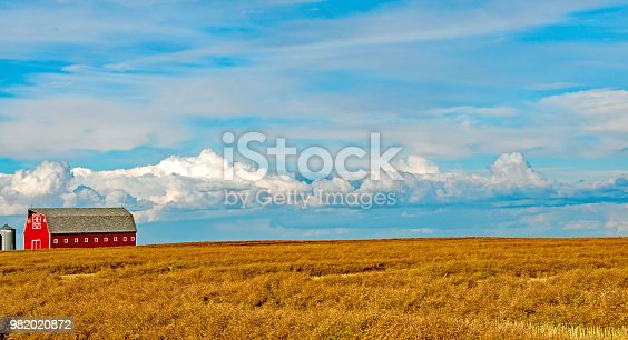A good wheat crop cut and  ready to harvest   September